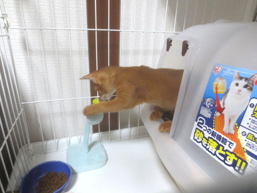 トイレから遊ぶアビのすけ。