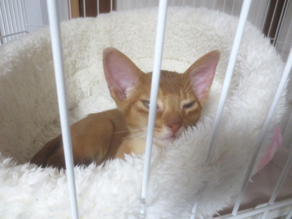 子猫はよく寝るんです。