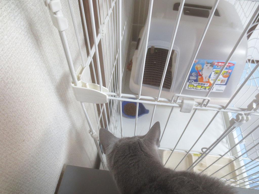 ロシ子もアビのすけを見ています。