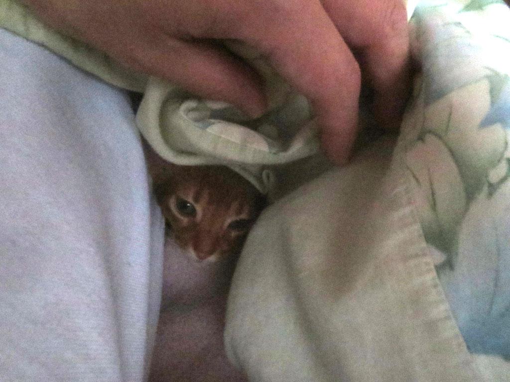 今朝の布団の中のアビのすけ。