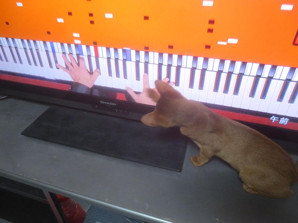 動き回るものに興味を持つ猫。