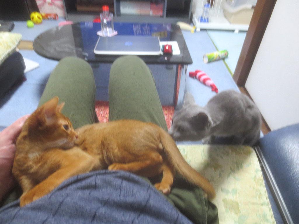 ロシ子がアビのすけを心配してます。