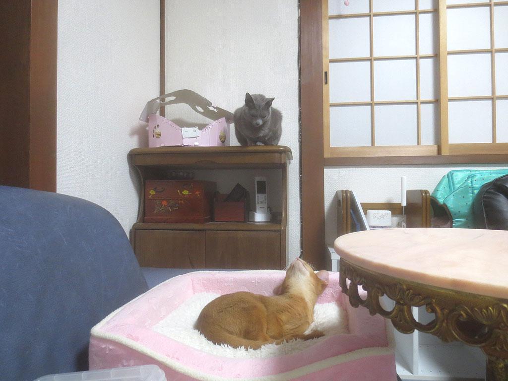ロシ子お姉が見守ります。