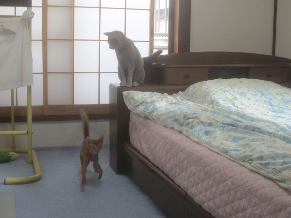 ロシ子もアビのすけを追いかけます。
