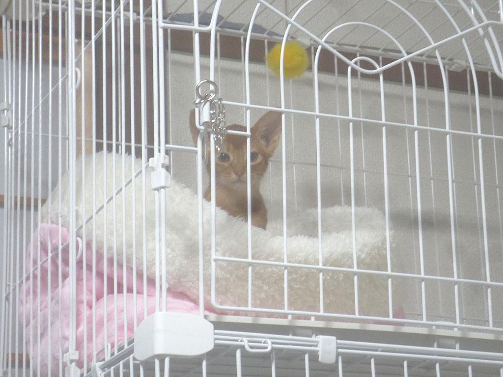 籠の中で寝るアビのすけ。