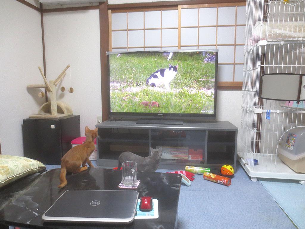 テレビの猫に興味を持つ2にゃん。