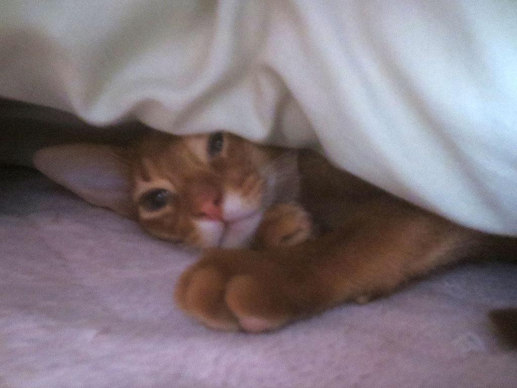 寝起きのアビのすけ。