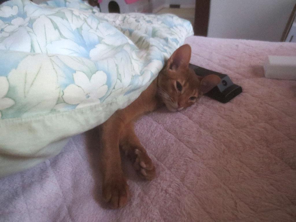 目を覚ましたアビのすけ。