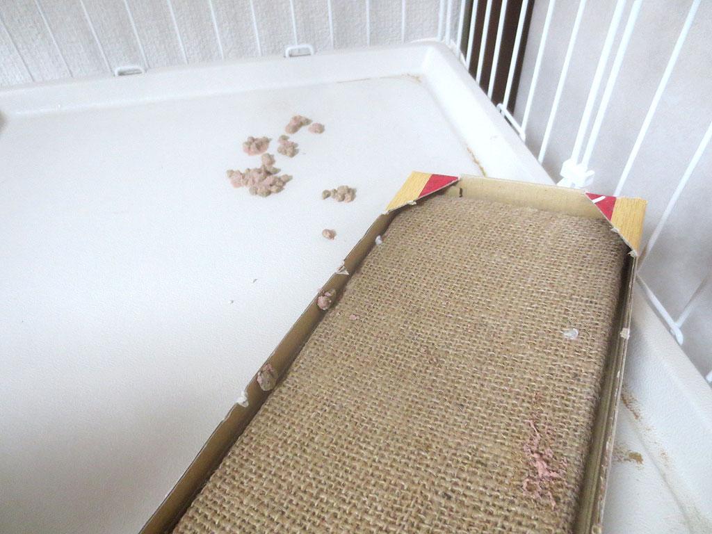 ケージの2階で吐いたアビのすけ。