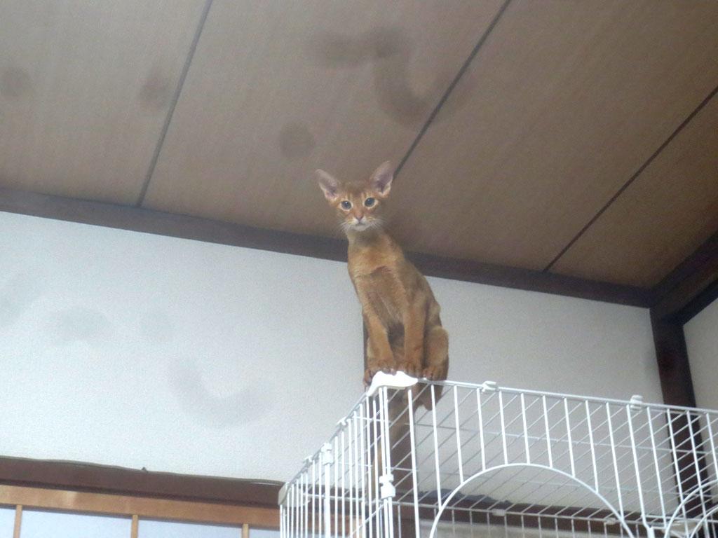 猫らしいアビのすけの様子。