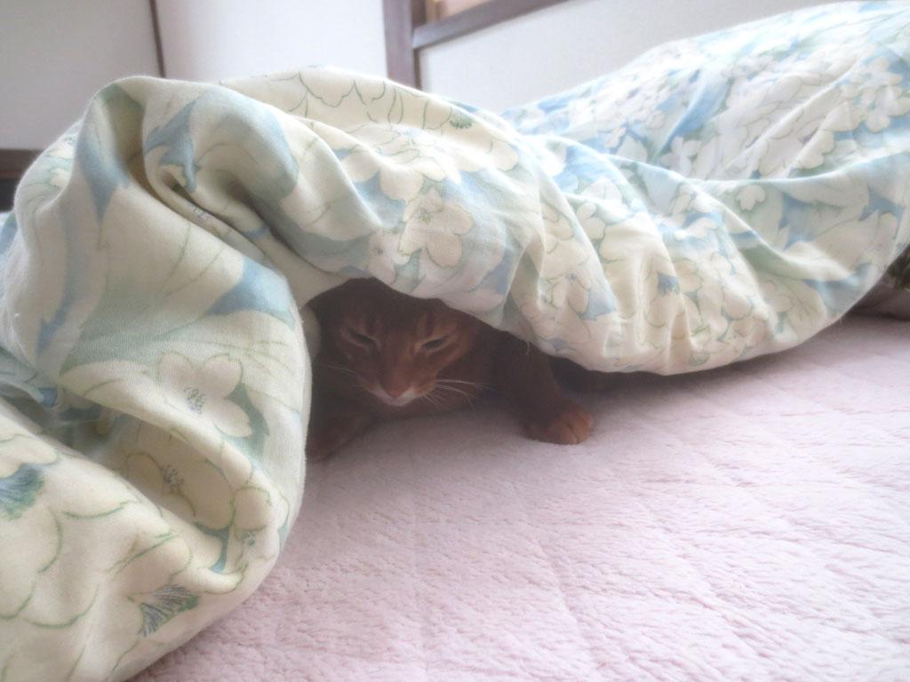 アビのすけの寝起き。