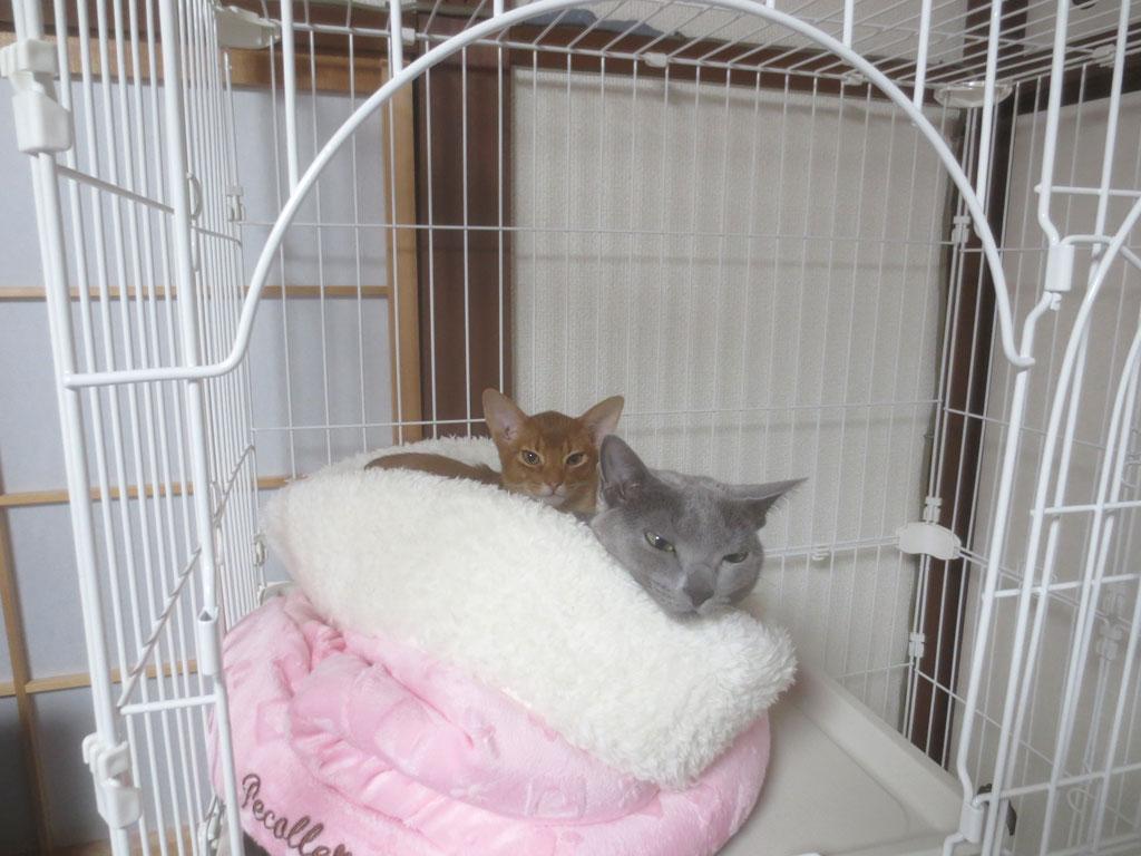 猫ベットの中の2にゃん。