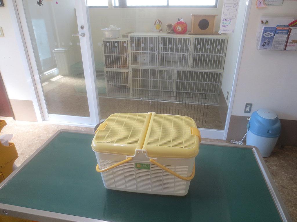 アビのすけを動物病院に残して。