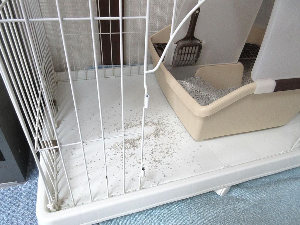 トイレの砂を撒き散らかすアビのすけ。