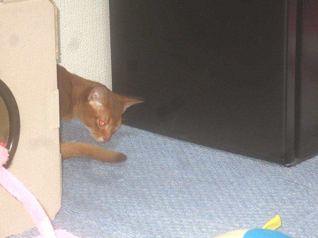 ロシ子の目が赤い。