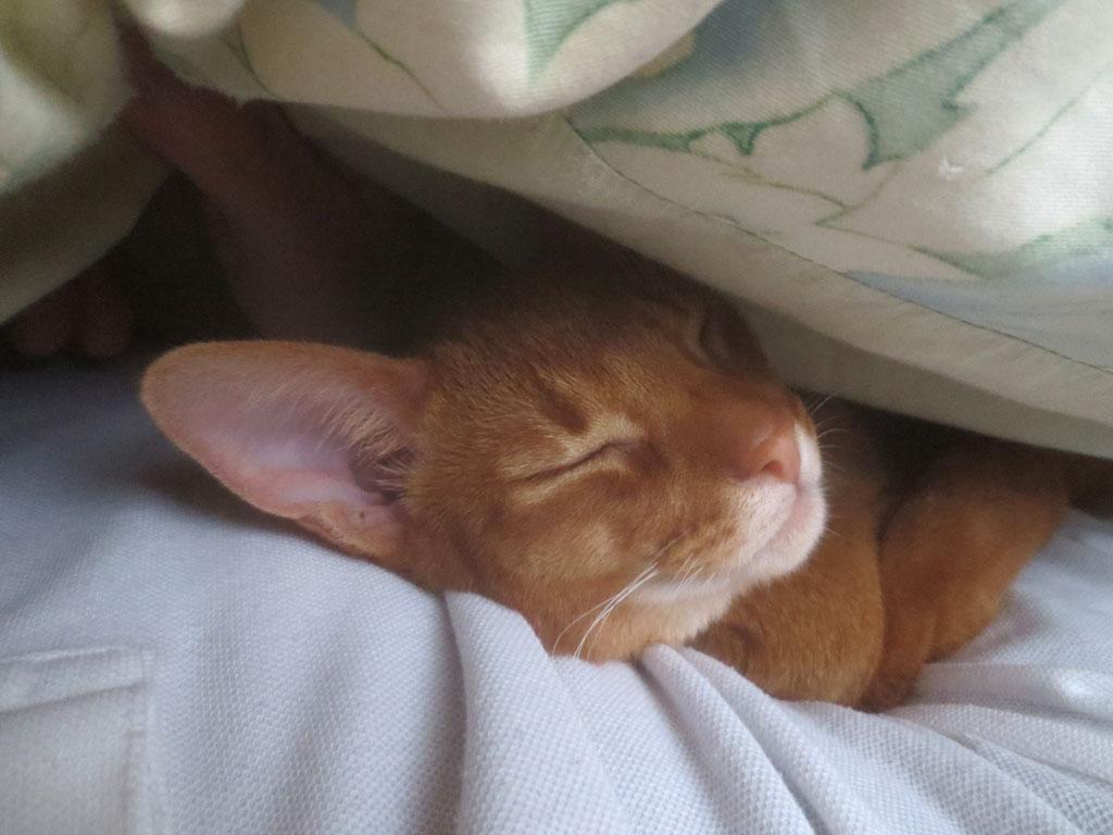 私の右脇で眠るアビのすけ。