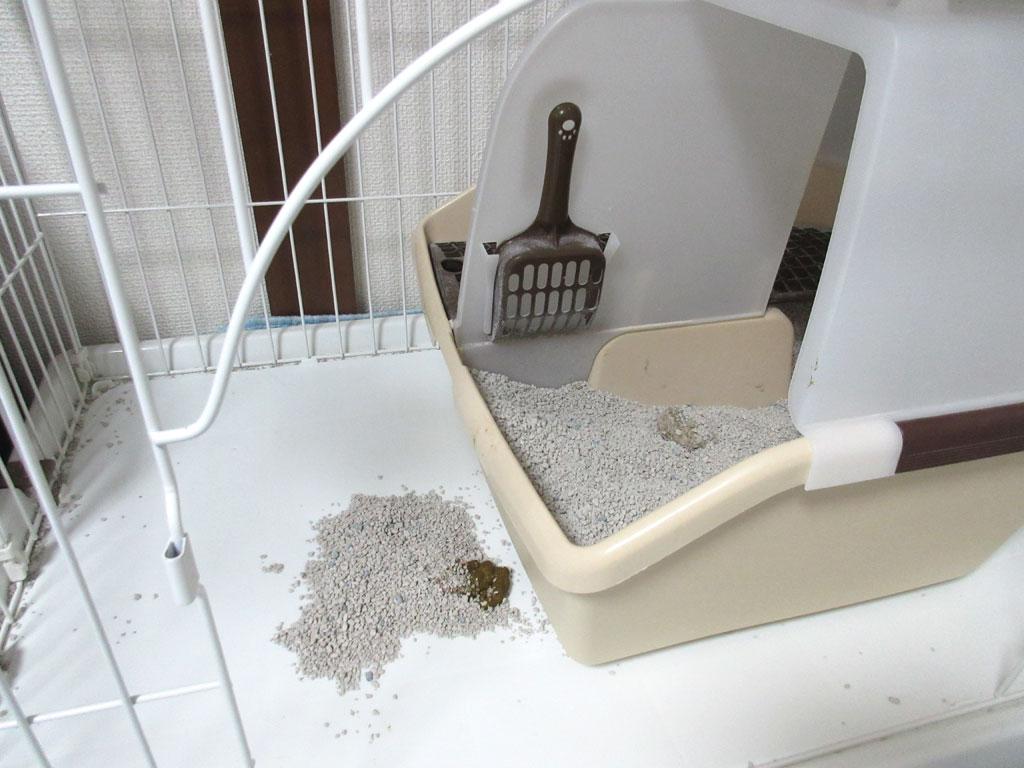 アビのすけのトイレの作法。
