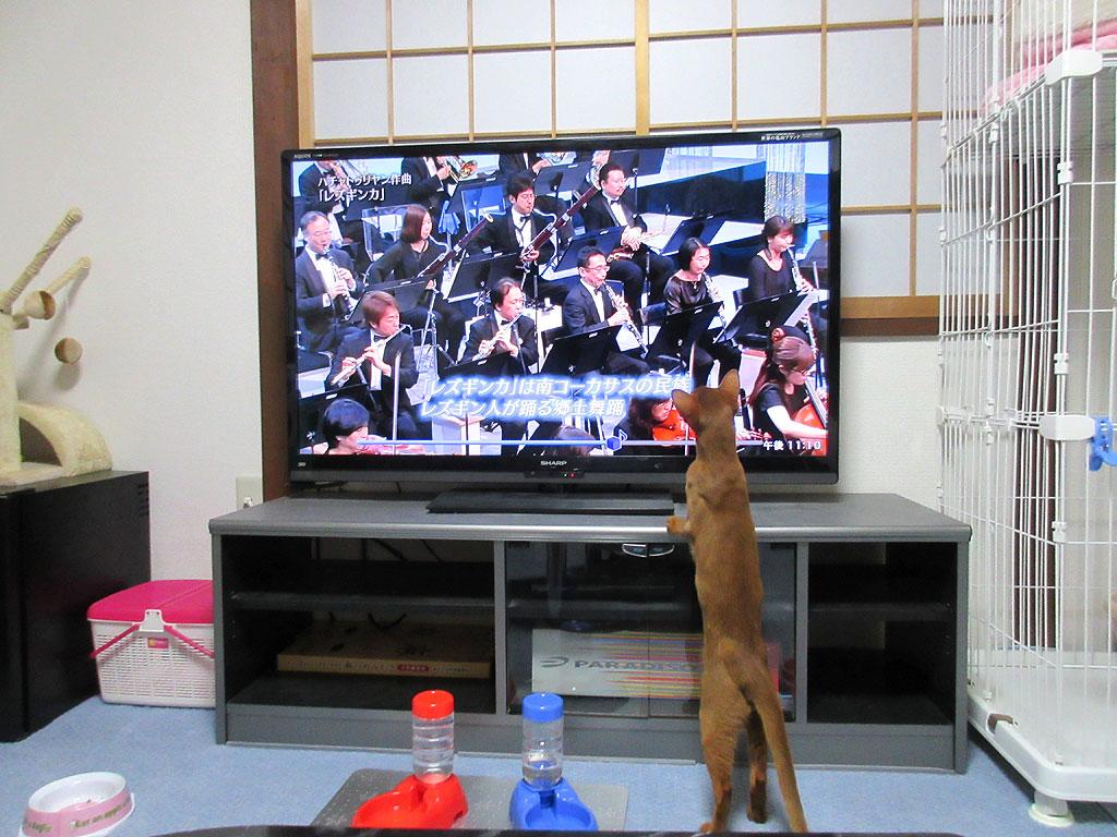 テレビ台に乗りかかるアビのすけ。