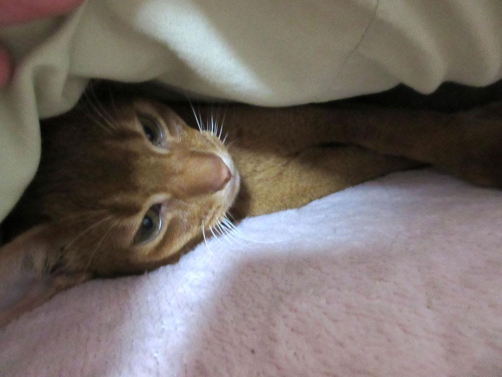 ぐっすりと寝ていたアビのすけ。