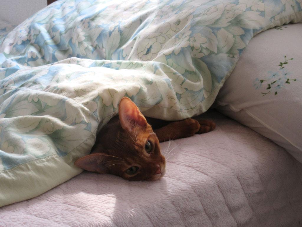 今日の朝のアビのすけ。