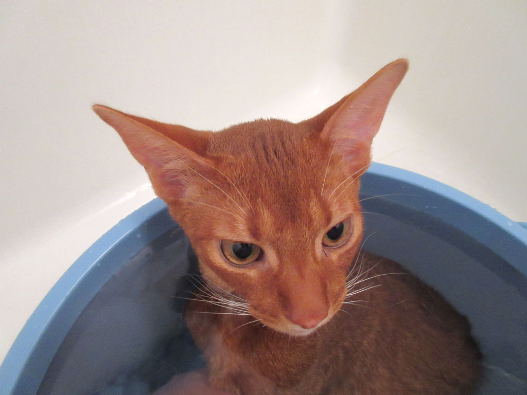 お風呂に浸かるアビのすけ。