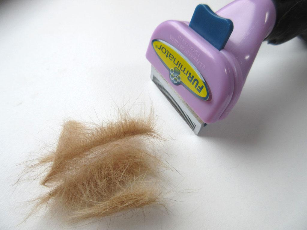 アビのすけの抜けた毛。