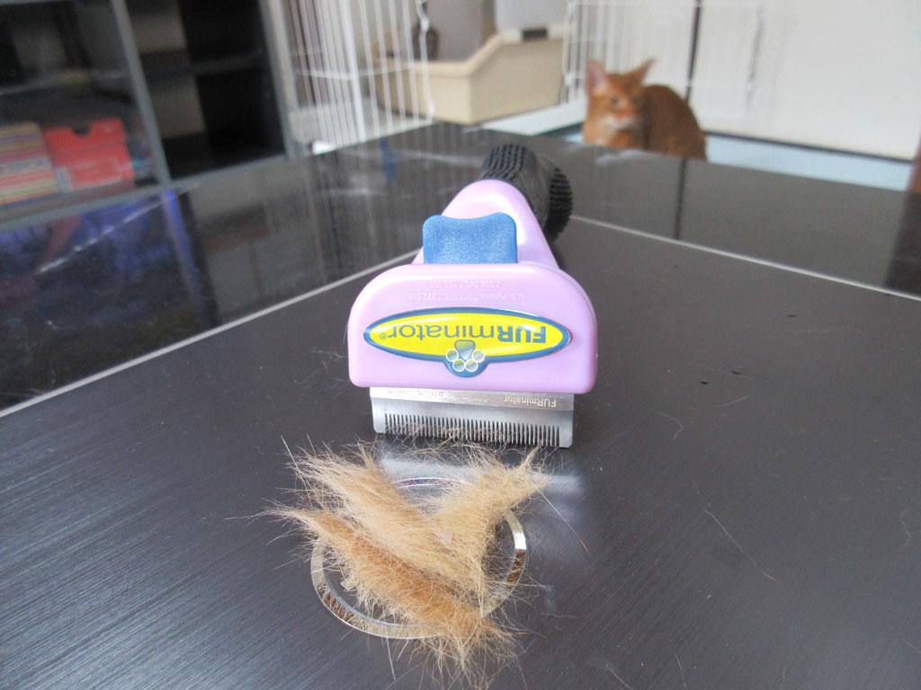 アビのすけの抜け毛。