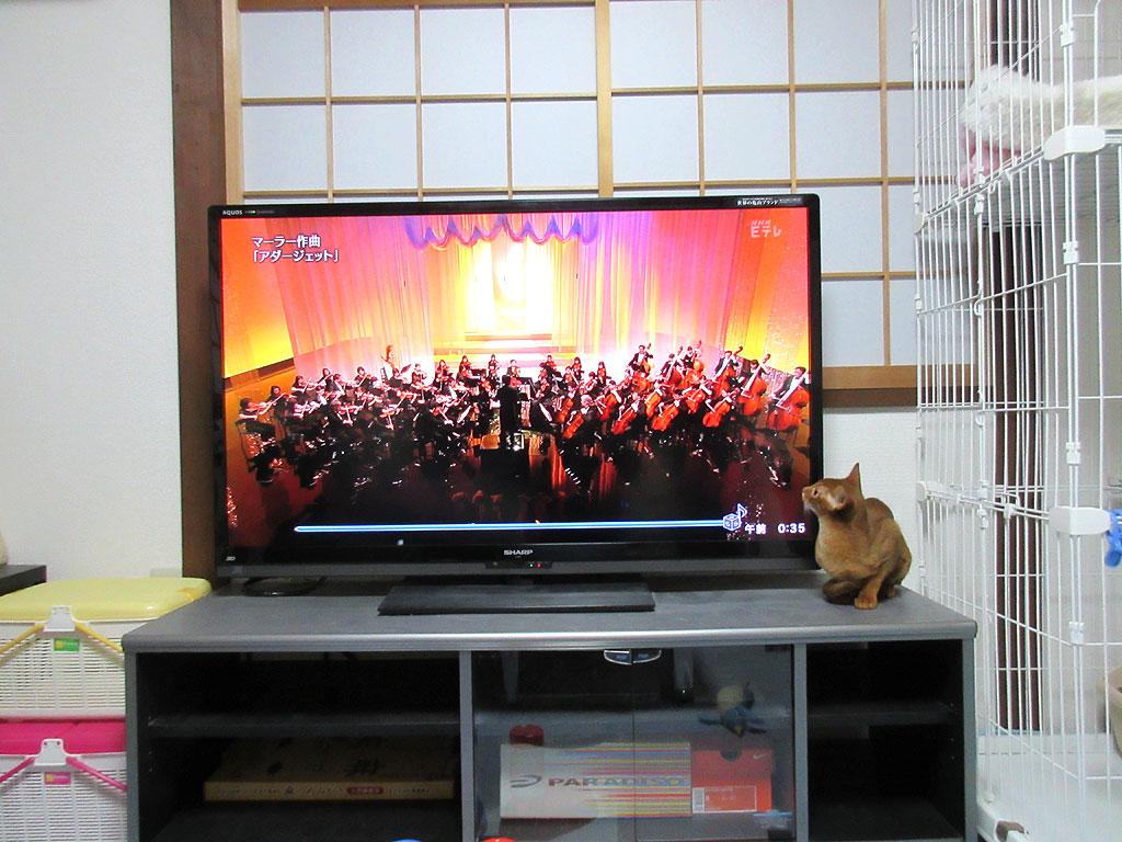 テレビの画面に触るアビのすけ。