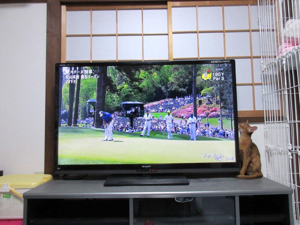 アビのすけもゴルフが好きな様。