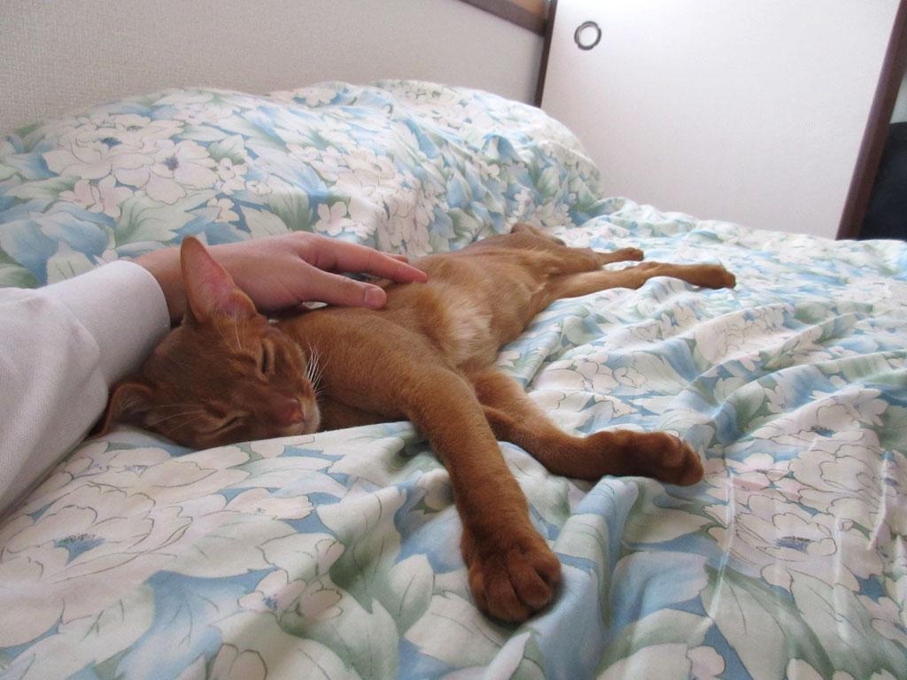無邪気に寝ているアビのすけ。
