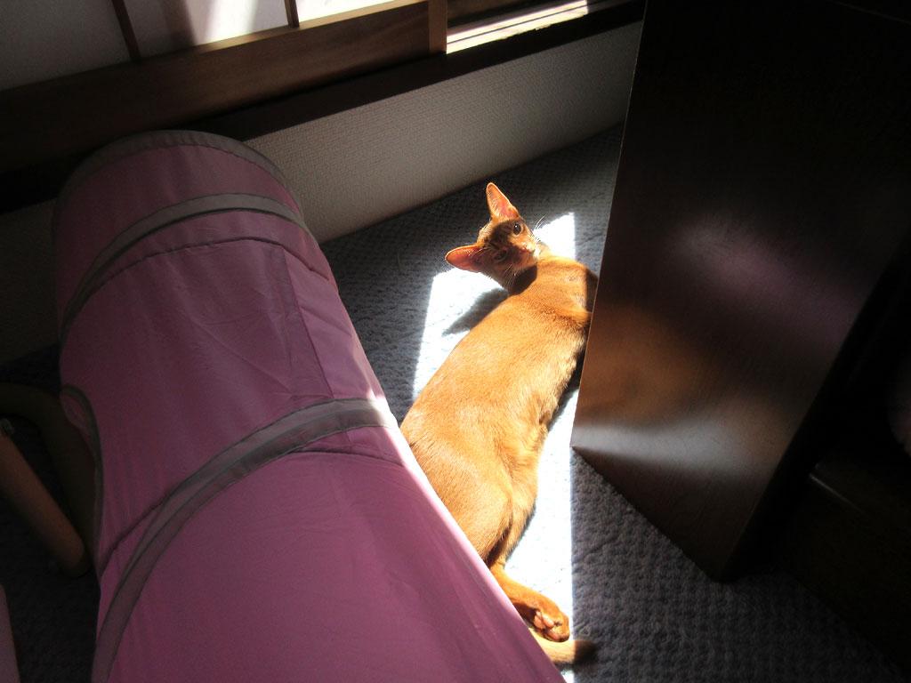 角度に合わせて寝ているアビ。