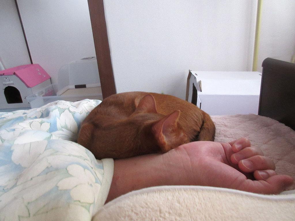 私のすぐ横で寝てくれるアビ。