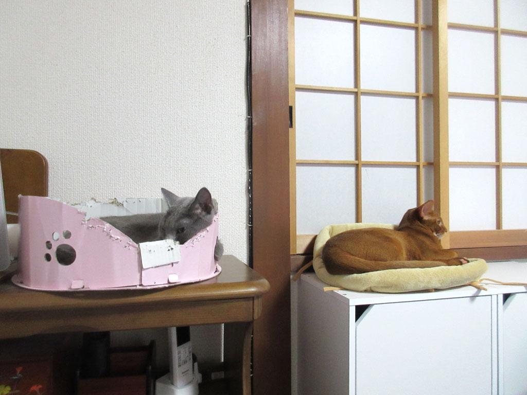 休憩する猫たち。