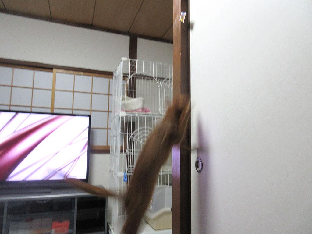 アビのすけがジャンプ!