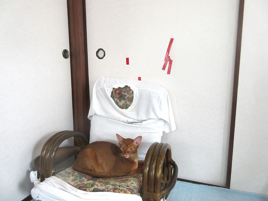 美猫なアビシニアンのアビのすけ。