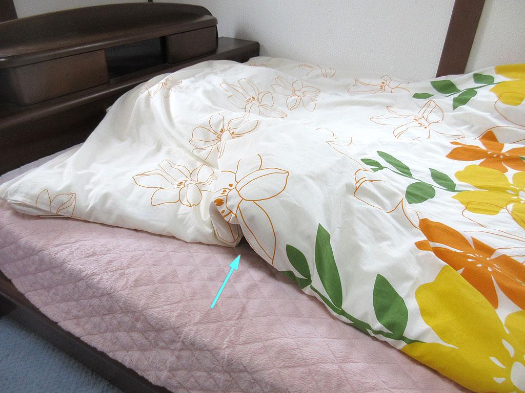 布団を被って寝てるアビシニアン。