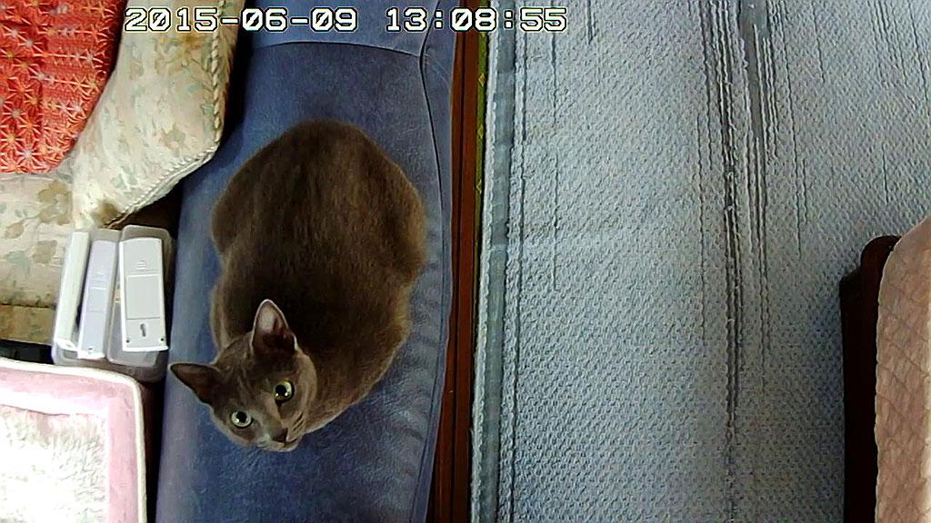 ロシ子がWebカメラをガン見中。