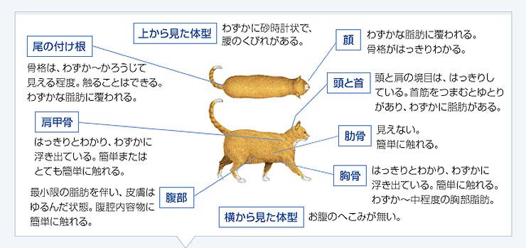 体重過剰な猫の体型。