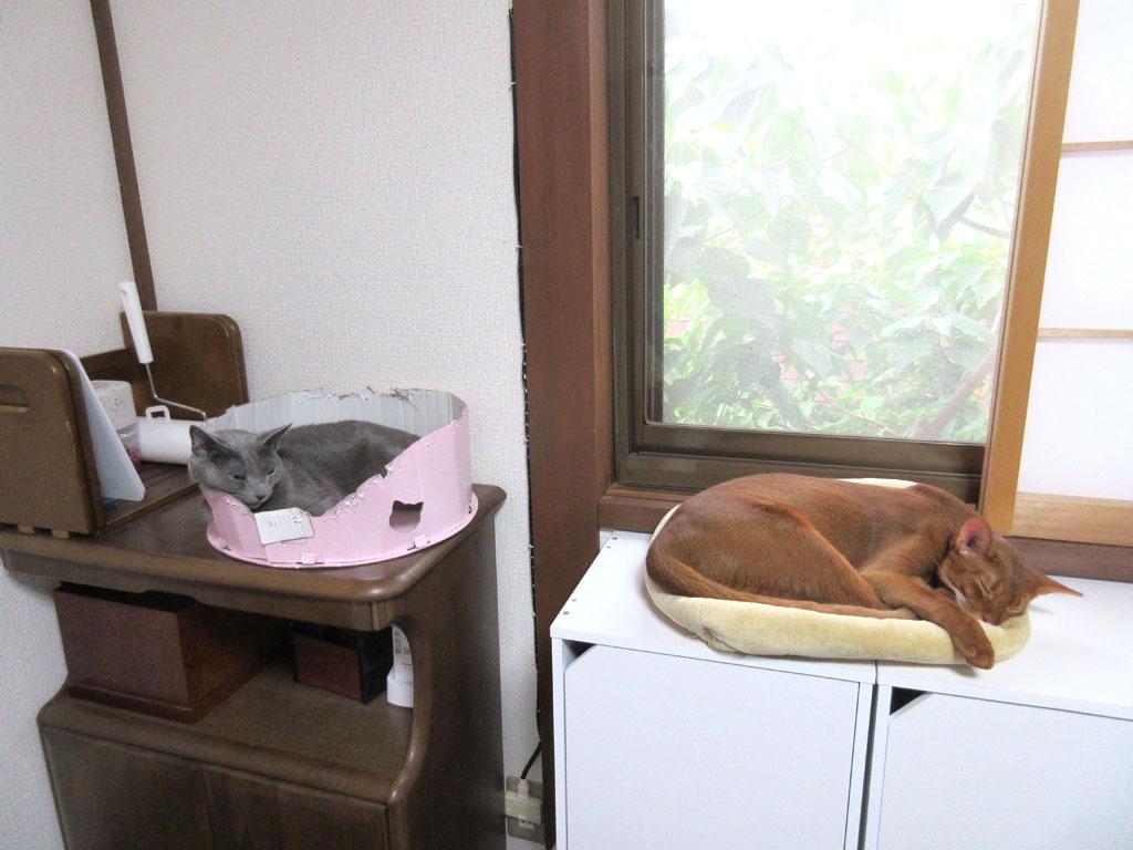 台風間近な我が家の猫たち。