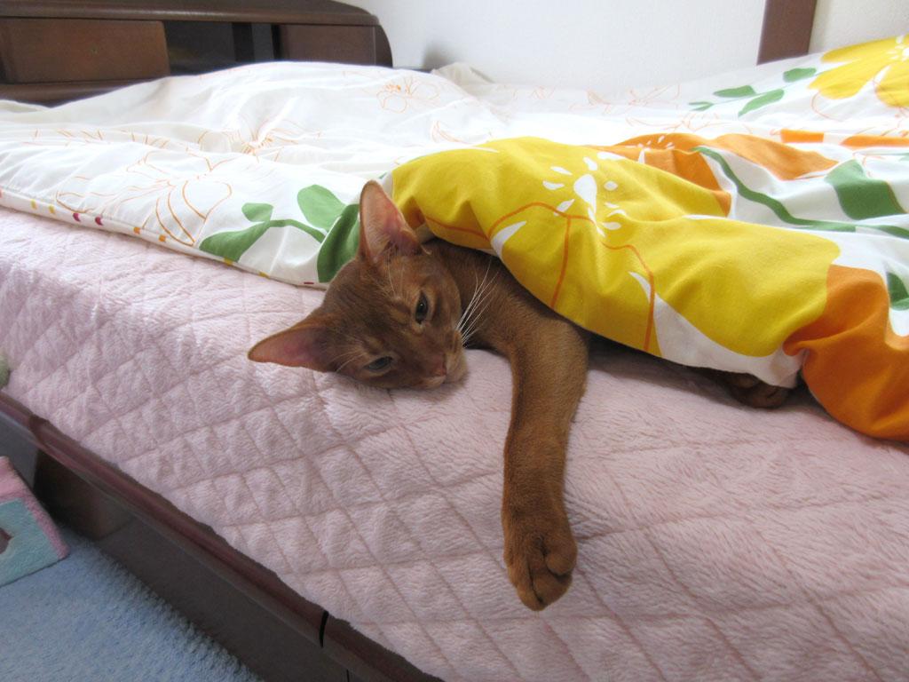 寝起きのアビのすけはかわいい。