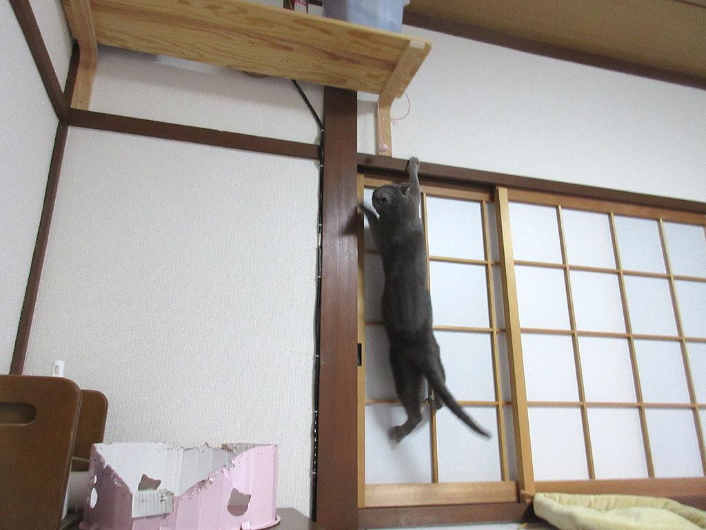 ロシ子もジャンプ!
