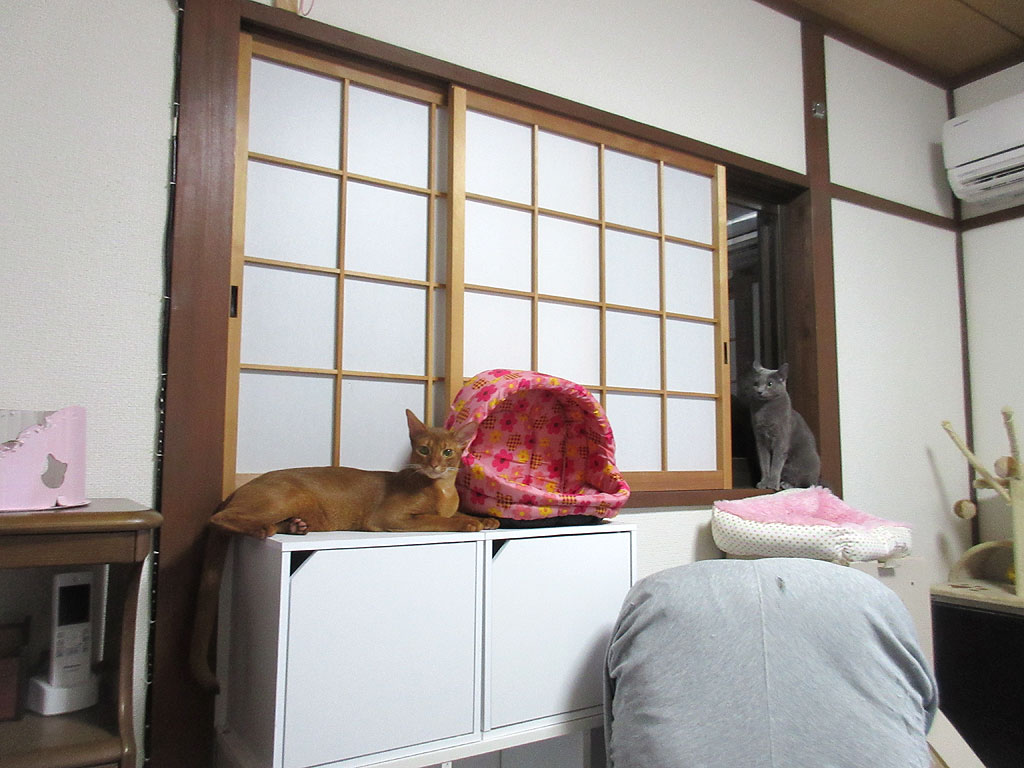 リラックスの我が家の猫たち。