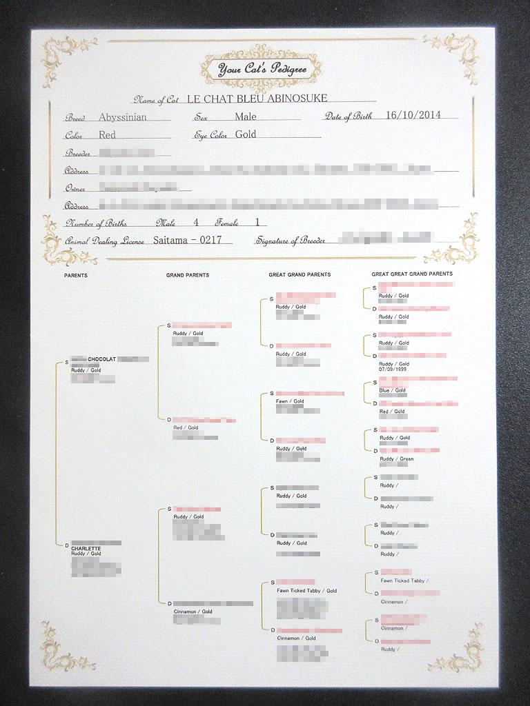 アビシニアンのアビのすけの血統書。