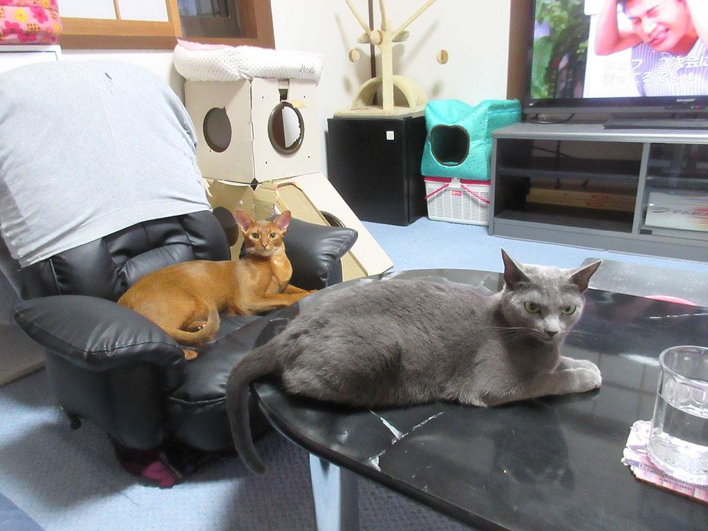 仲良しの猫達。