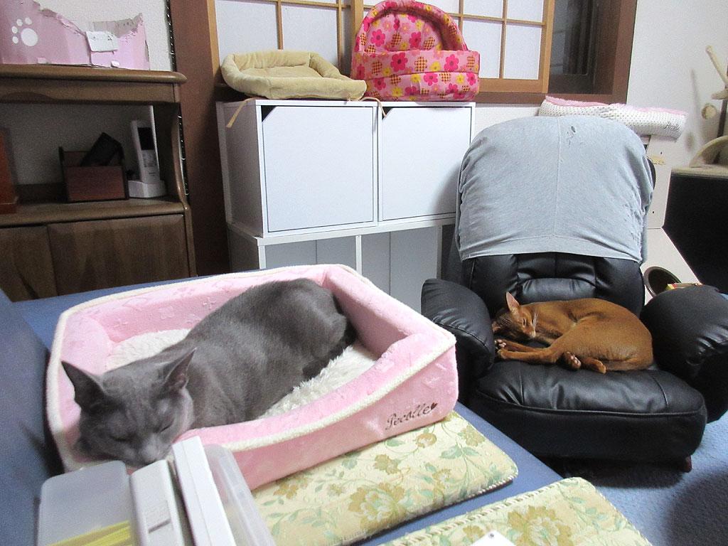 寝てしまった我が家の猫達。