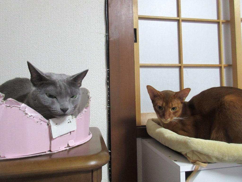 顔の大きさが違う猫達。