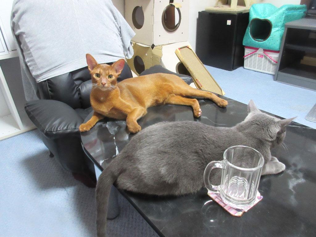 まったりしている猫達。