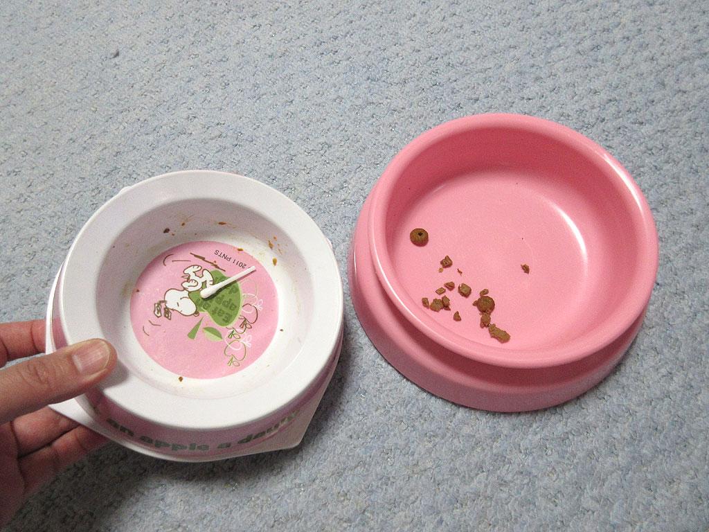 ロシ子の残飯をアビのお皿に。