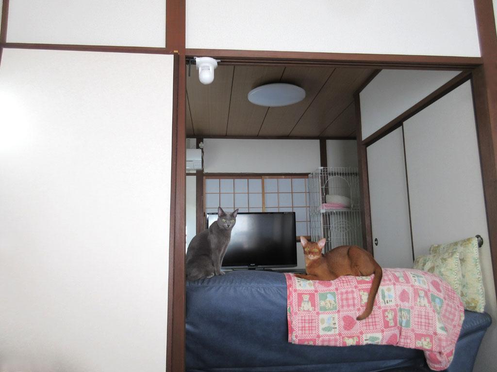 早朝の我が家の猫達。