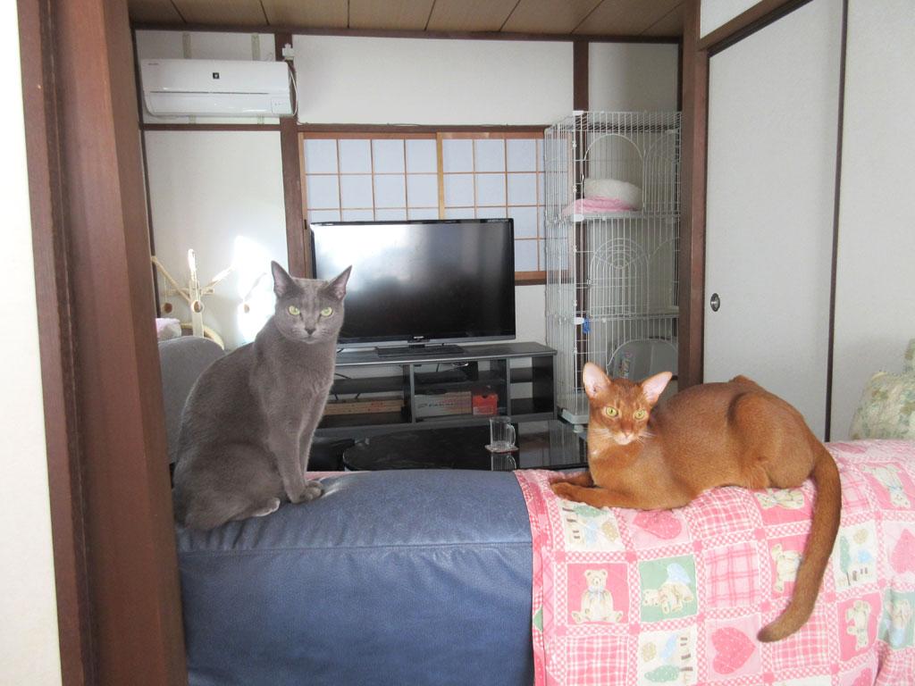 かわいい我が家の猫達。